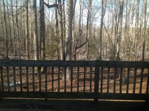 View of woods from living room